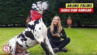 Video 10 Anjing Paling Buas Dan Paling Ganas Yang Mesti Kalian Hindari MP3, 3GP, MP4, WEBM, AVI, FLV April 2019