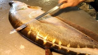 Video Big Clown Knifefish Slicing | Chitol Fish Cutting | Big Fish Cutting in Fish Market MP3, 3GP, MP4, WEBM, AVI, FLV Februari 2019