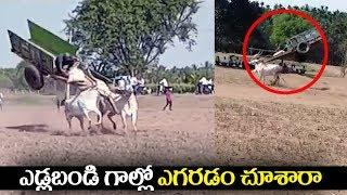 Video ఎడ్లబండి గాల్లో ఎగరడం చూశారా |bullock cart racing | viral videos | Telugu Trending MP3, 3GP, MP4, WEBM, AVI, FLV April 2019