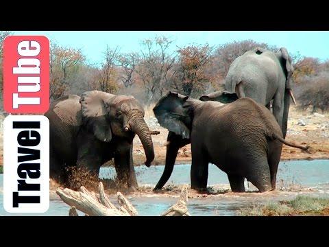 Elephants playing in waterhole Etosha NP