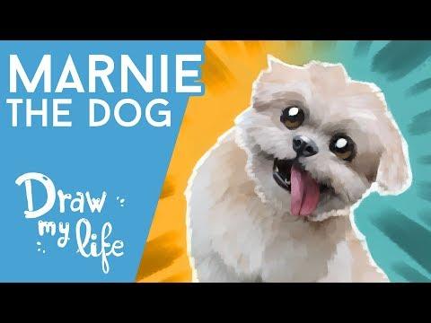 ¿Quién es MARNIE THE DOG? - Celebrity Draw