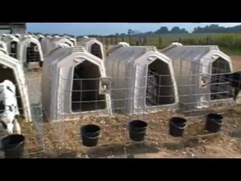 Dairy Calf Hutches Calf Hutches Video