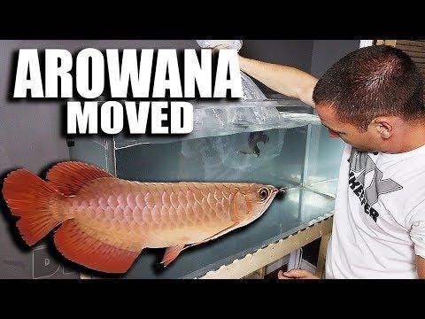 370G aquarium SHUT DOWN and FISH MOVED_Legjobb videók: Akvárium