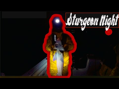 ( MONTEZUMA SLOUGH) Sturgeon Night 3 2018