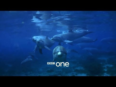 Documentary Discovers Flipper Likes To Get Stoned On Puffer Fish