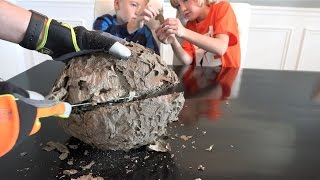 Tata z dziećmi zaczął rozcinać gniazdo os – Jego wnętrze sprawiło, że opadły im szczęki!