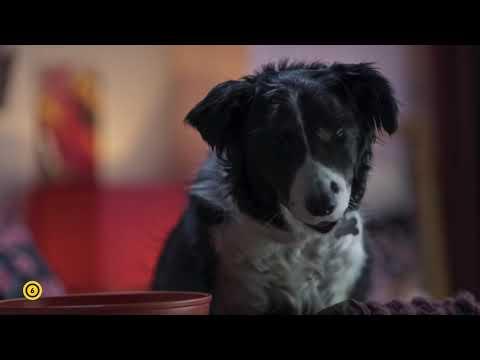 Kutyák és macskák 3. - A mancs parancs - Szinkronos elzetes (6)