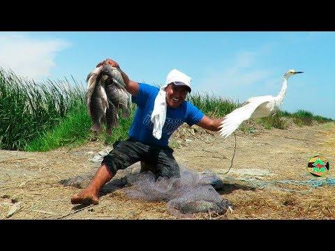Videos caseros - IMPRESIONANTE PESCA CON ATARRAYA - Pescador Atrapa Ave con su Atarraya