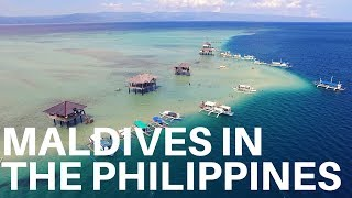Bais Philippines  city images : Maldive of the Philippines/ Manjuyod Sandbar, Dolphins in Bais City n Turtles in Apo Island