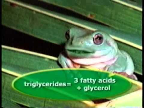 Types of Lipids