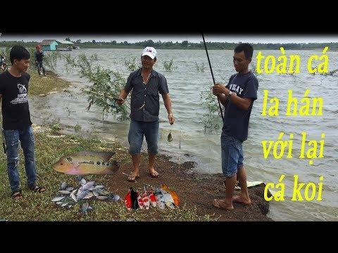Đi câu cá câu được toàn cá la hán với cá koi - Thần Nông - Thời lượng: 14:53.