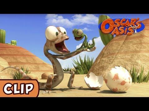 Oscar's Oasis - Baby Lizard | HQ | Funny Cartoons