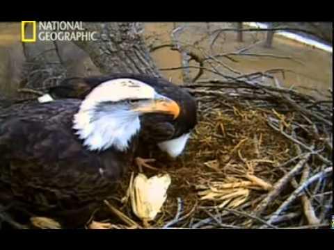 El Águila americana - Documental Parte 2/4 HD