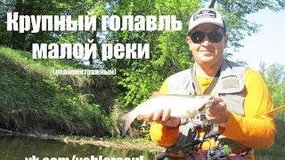 Голавль на малой реке!