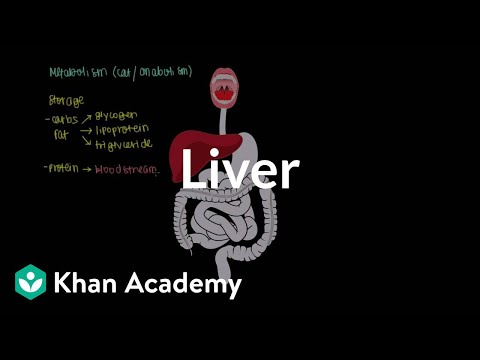 Liver Video Human Anatomy And Physiology Khan Academy