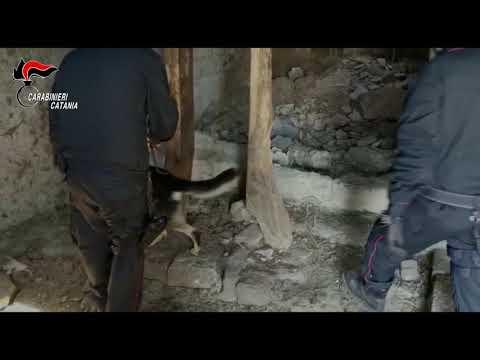 Allevamento di cavalli per nascondere la droga VIDEO