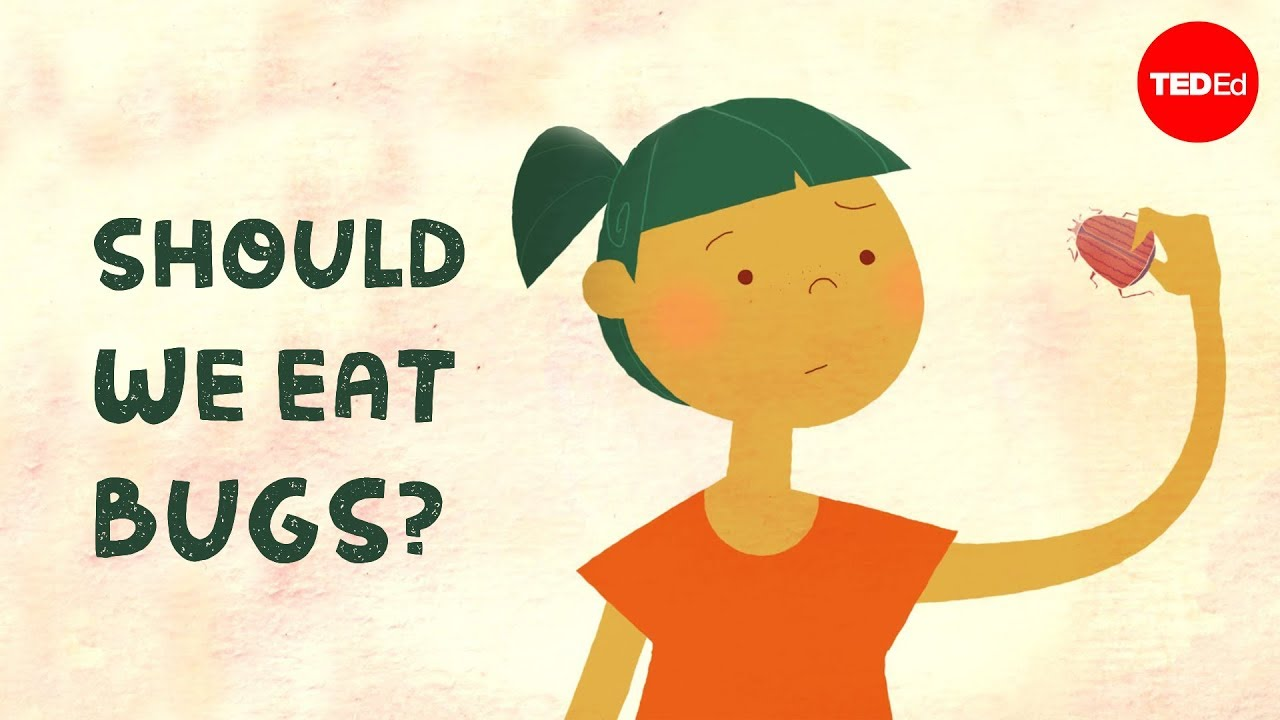 Should We Eat Bugs?