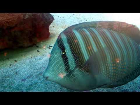 Aquarium Cafeteria - Tierpark Berlin - 09.09.2017/2