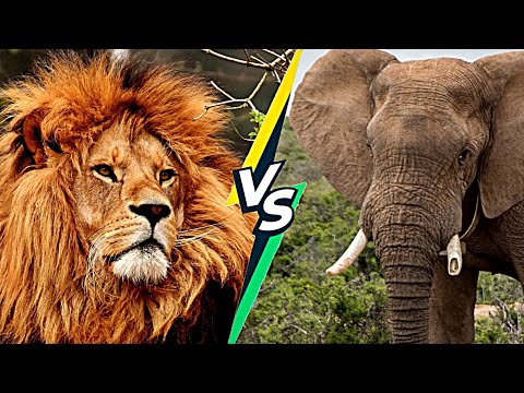 Who will Win Lion vs Elephant | Elephant and Lion Fight in Hindi | Lion Fight | Elephant Fight
