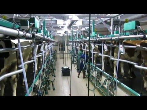 «Бутенко» молочний комплекс