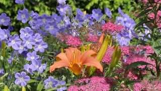 Фото листьев и цветов липы 83