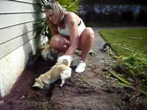 Chihuahua   gardening