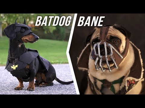 Ep #6: BATDOG vs. BANE - (Cute Dachshund & Pug in Funny Dog Video)