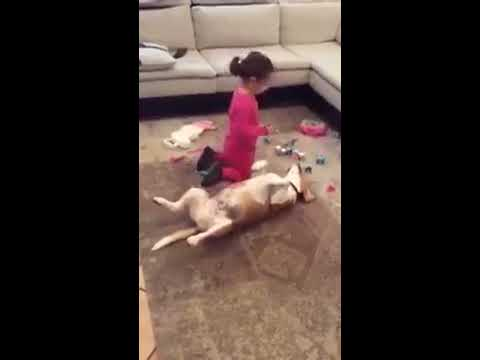 Funny Cute Kid and Dog Playing Doctor-patient game – Best Compilation