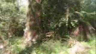 Sassafras Gully Australia  City new picture : Hiking along the Sassafras Creek Gully, Monbulk