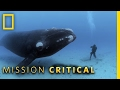 Brian Skerry's Iconic Photo | Mission Critical