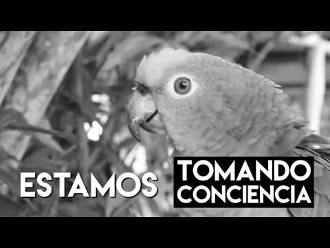 Denuncie el Tráfico Ilegal de Fauna Silvestre