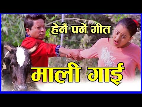 (New lok dohori song 2073 | Mali gai | Devi Gharti & Baburam Panthi | Mahendra Gautam & Anu Niraula - Duration: 10:30.)