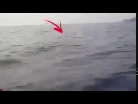 qualcosa si avvicina alla barca e... da vedere!!!