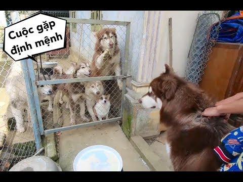 Mật Em lần đầu gặp Mật Anh- đoàn tụ gia đình cùng Moon,Meo, Su ăn tết - Thời lượng: 14 phút.