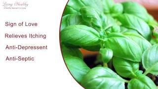Living Healthy Moment - Basil