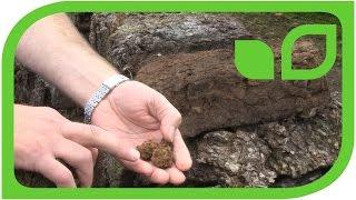 Torfabbau: Wie wird Weisstorf abgebaut Teil 7