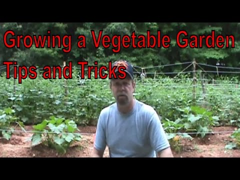 Garden tips - In this video I show and update on my vegetable garden as well as some of the tips and tricks I use to help raise my vegetables. Check out the size of those ...