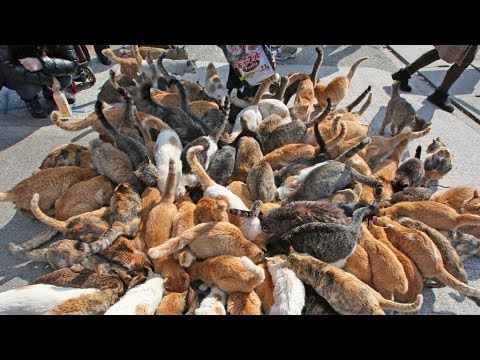Japan's Cat Island - Incredible!