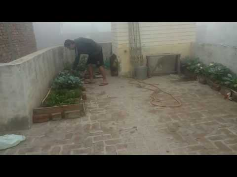 Video छत पर बागवानी  सुरेश शर्मा सिरसा download in MP3, 3GP, MP4, WEBM, AVI, FLV January 2017