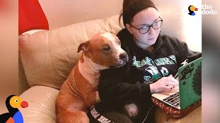 Dog Whose Photo Went Viral Has Sweetest Adoption Story - RUSS UPDATE | The Dodo by The Dodo