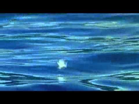la-storia-dellamicizia-tra-un-cane-e-un-delfino-325