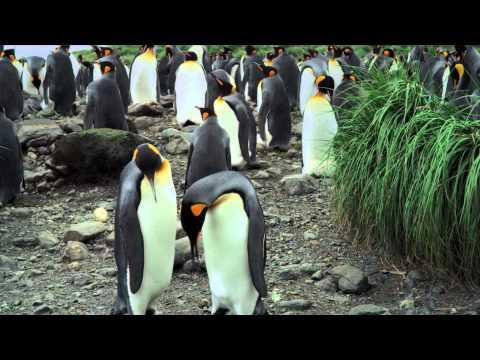 A Pingvinkirály 3D mozi előzetes