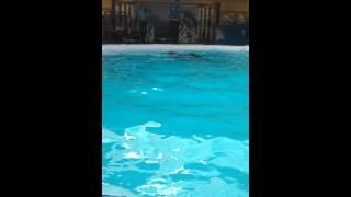 Si lumba lumba part 2 Video