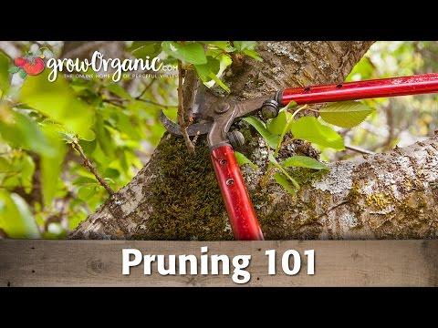 Pruning 101