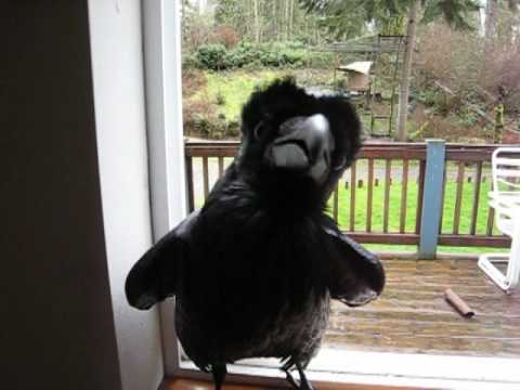 Watching This Raven Recite Nevermore From The Raven Will Blow Your Mind