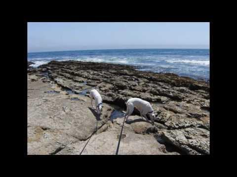 I Hurt (Beach Scenes and My Pups)