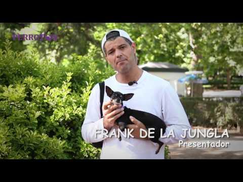 Perrotón: II carrera por la adopción y tenencia responsable de animales de compañía en Madrid