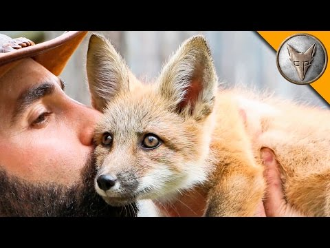 Animal Expert Coyote Peterson Meets a Adorable Baby