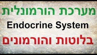 דר' קובי עזרא Ph.D מספר על המערכת ההורמונלית הנקרת גם המערכת האנדוקרינית (מערכת להפרשה פנימית), באופן כללי על הבלוטות והורמונים. http://diet2all.net המערכת ההורמונלית כוללת אוסף של בלוטות שמייצרות ומפרישות הורמונים אל מחזור הדם. להלן סירטונים מעניינים בתחום ההורמונים: הורמוני המין, טסטוסטרון ואסטרוגן http://bit.ly/2tpqwZtהסימנים לטסטוסטרון ירוד? http://bit.ly/2skWEK4 טסטוסטרון הגברי http://bit.ly/2s12IYO תפקידה של המערכת האנדוקרינית הוא לשלוט בתהליכי זירוז, ויסות, גדילה וחילוף חומרים שמתקיימים באיברי הגוף. המערכת ההורמונלית פועלת בשיתוף פעולה עם מערכת העצבים, כאשר שתיהן שותפות לתהליכי בקרה בגופנו. בלוטה הורמונלית היא איבר או צבר תאים המייצר ומפריש חומר כימי ספציפי. מערכת ההפרשה הפנימית מעבירה חומרים כימיים המשפיעים על תהליכים המתרחשים בגוף.