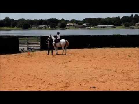 Horseback Riding in Orlando at Al Marah Arabian Horses in Clermont